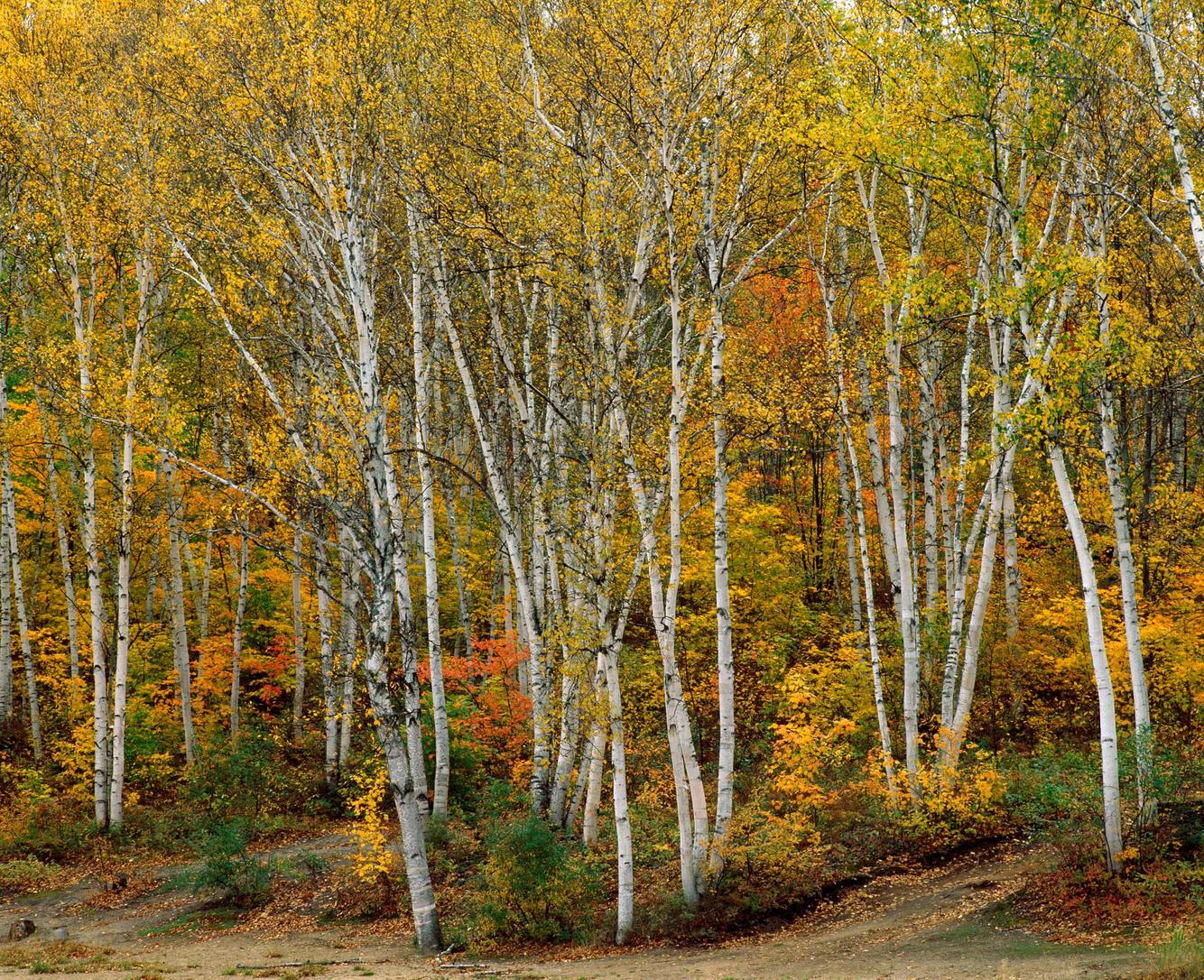 Arrowhead Autumn