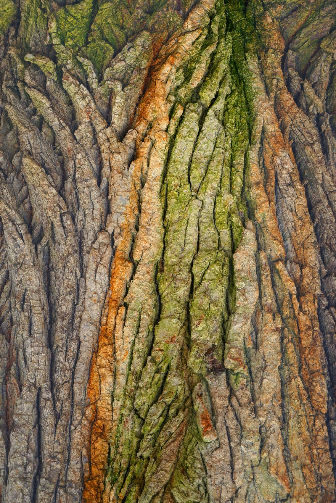 Tree Bark Enhanced