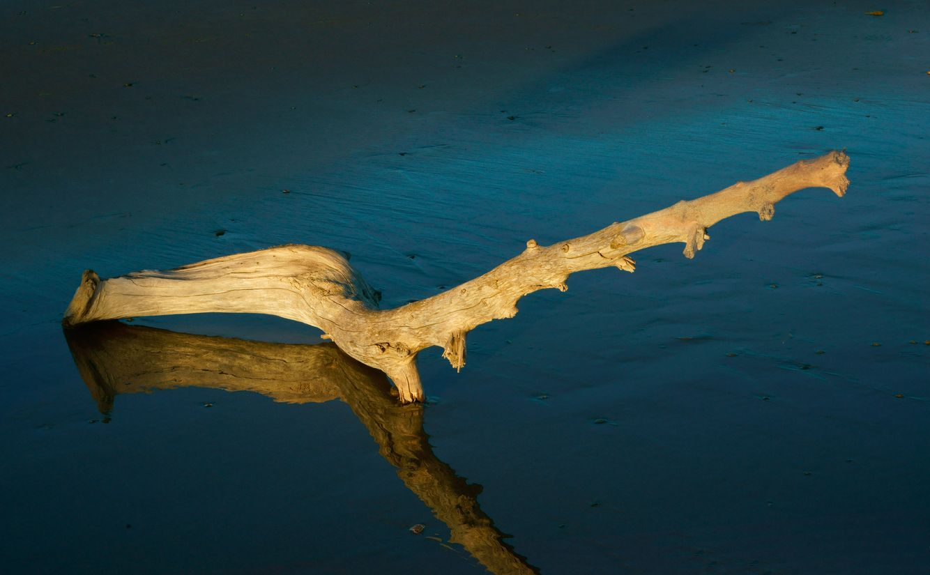 Driftwood on Long Beach