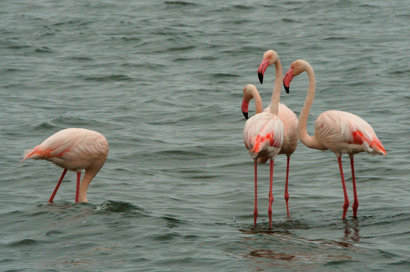 4 Pink Flamingos