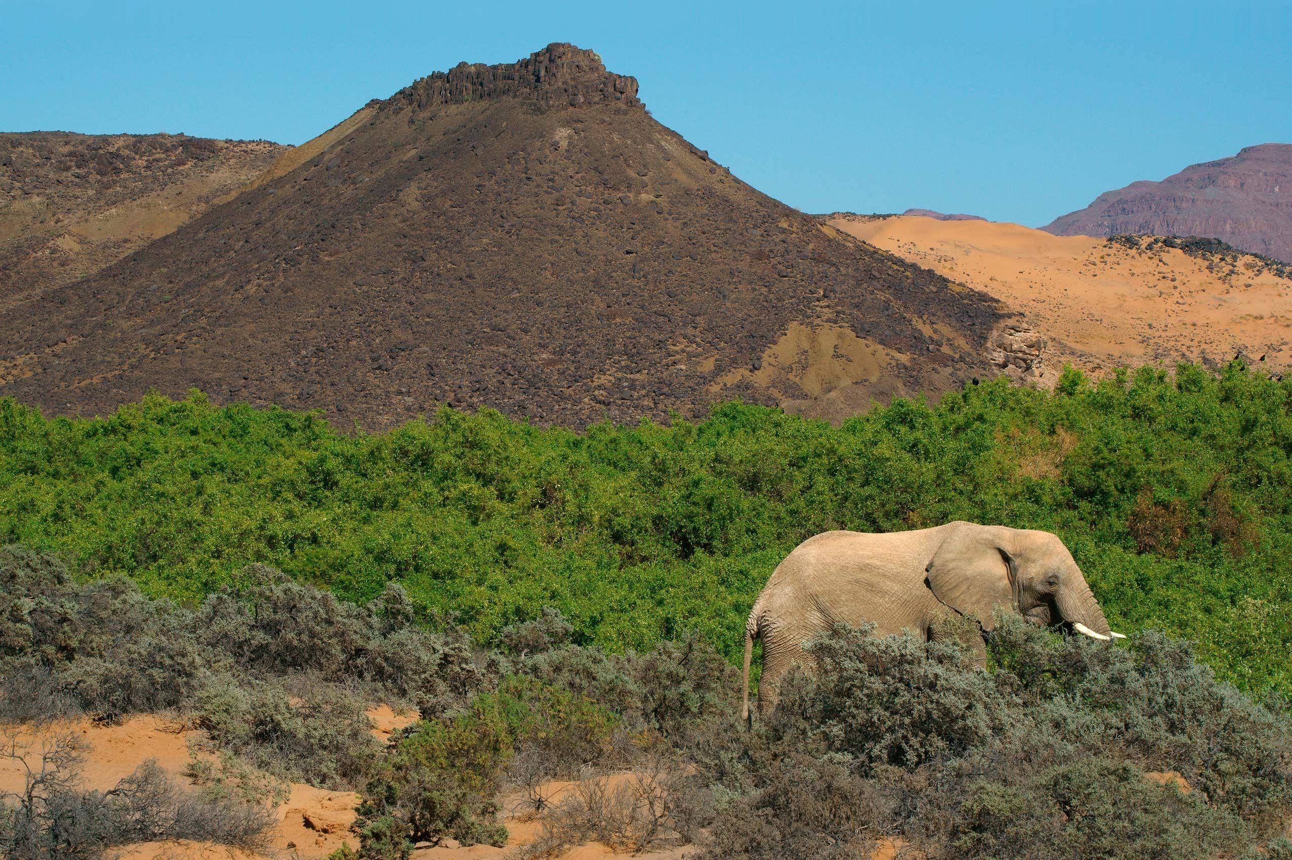Elephant and Greenery