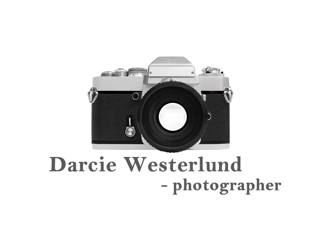 Darcie Westerlund
