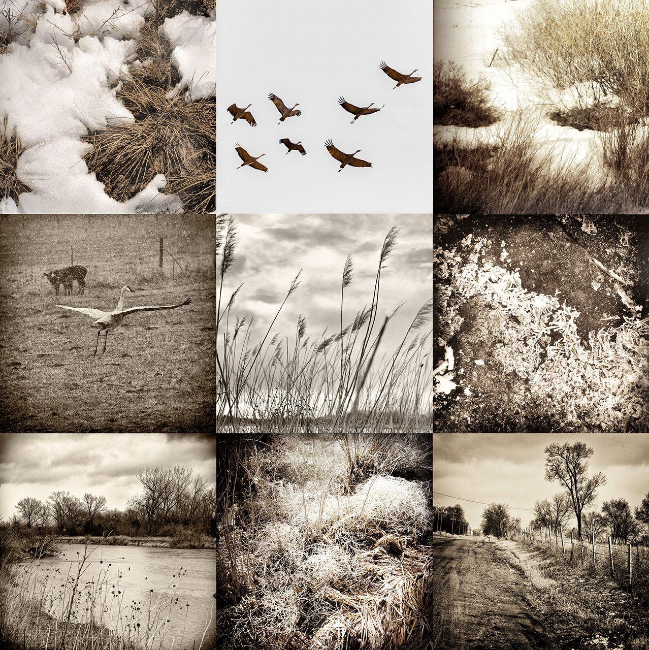 Winter variation.jpg