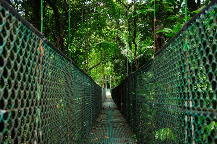 Suspension Bridge in Rainforest