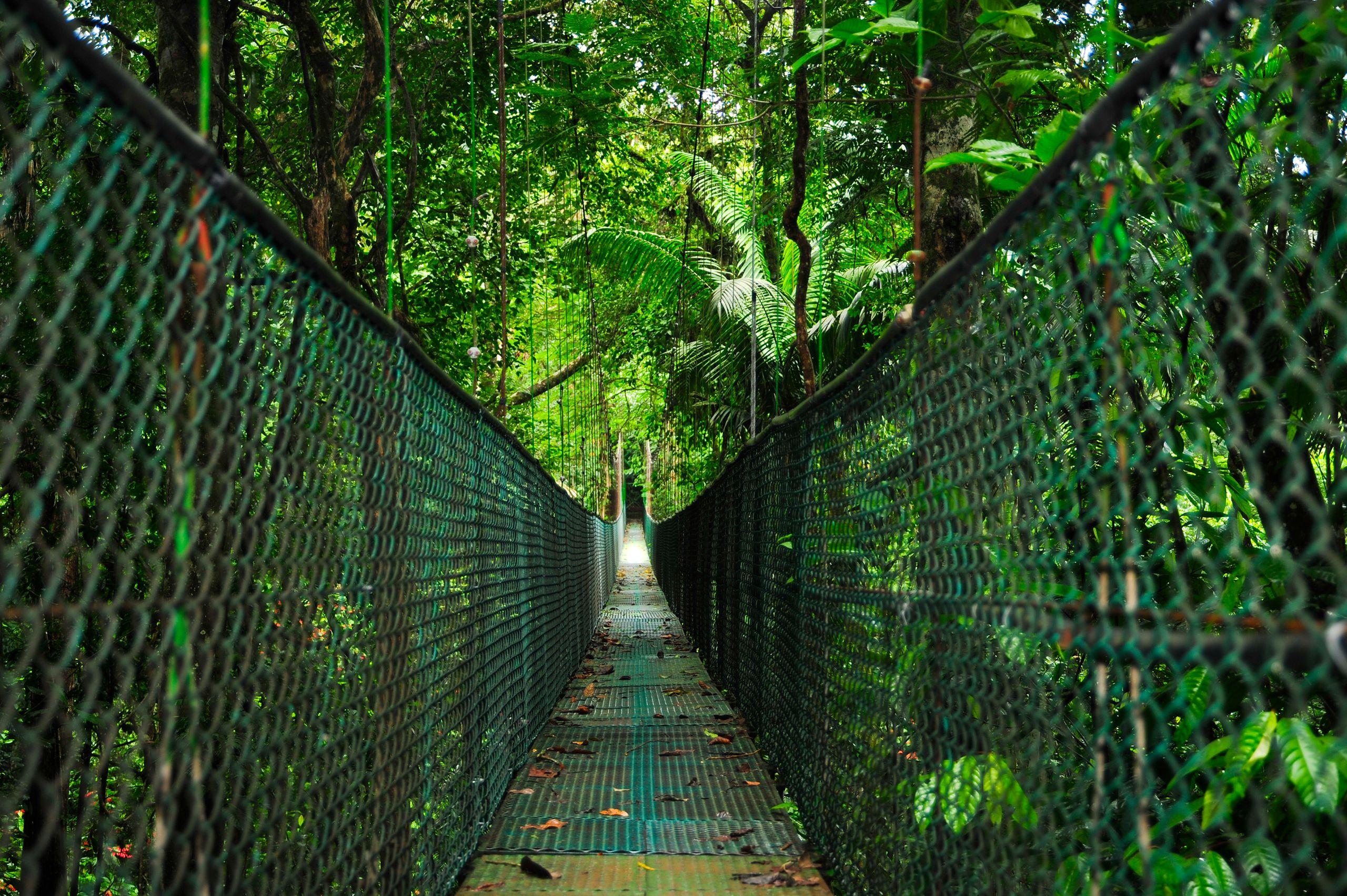 Suspension Bridge Over Rain Forest