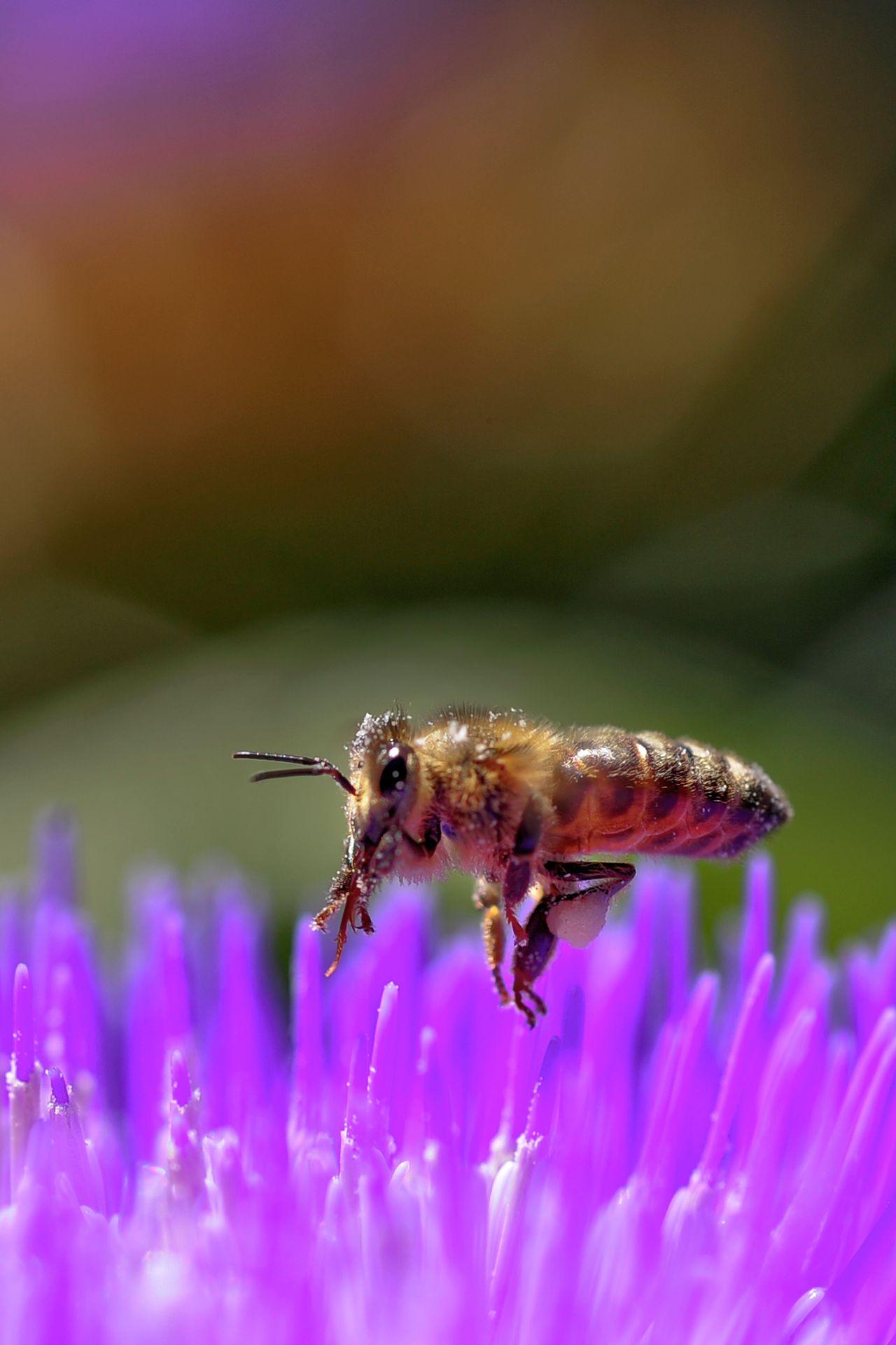 Bee and Artichoke Flower