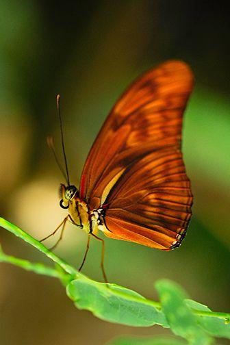 Butterfly Garden Resident