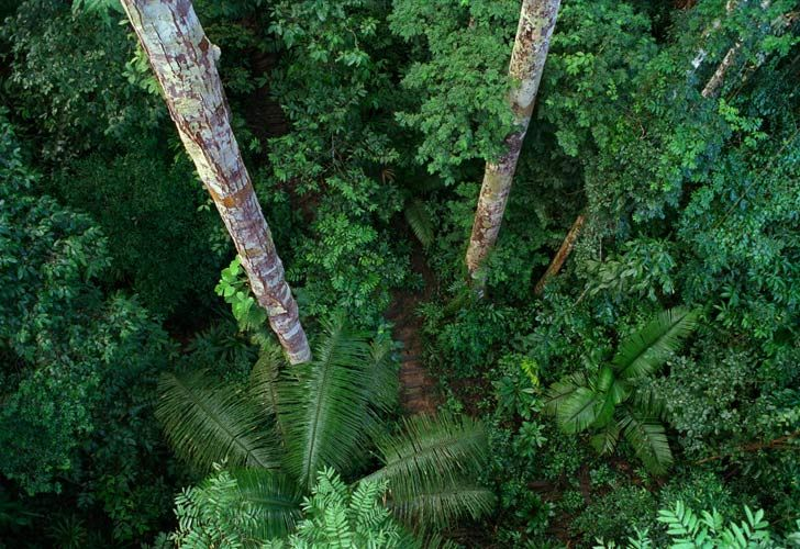 PERU13-6 Amazon Forest