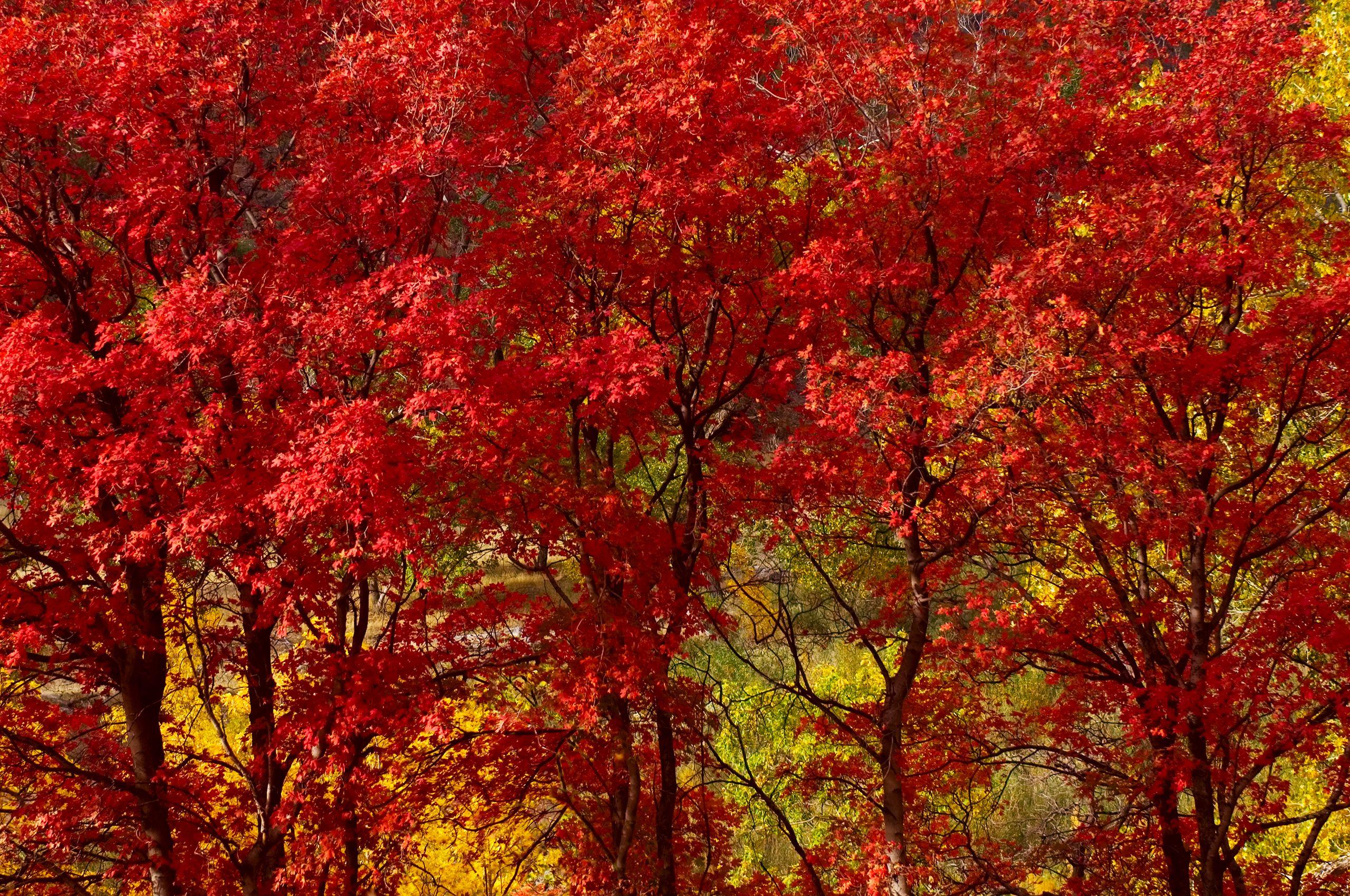 Fall Color in Zion