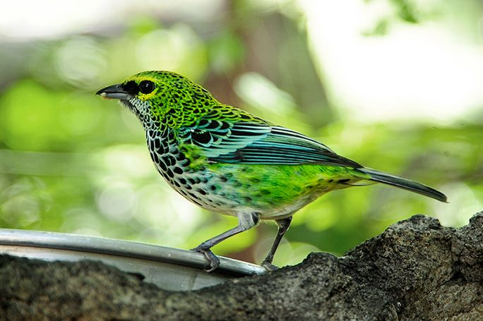 Blue and Green Bird
