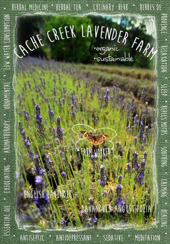 Lavender Farm Ad