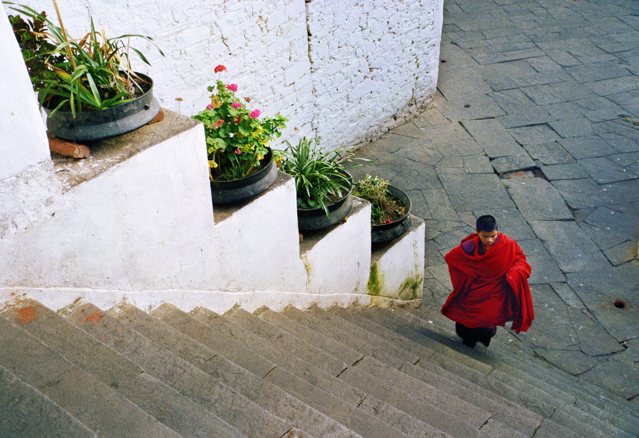 Red Robe on Rinchen Pung Dzong Stairs
