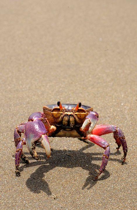 Holloween Crab