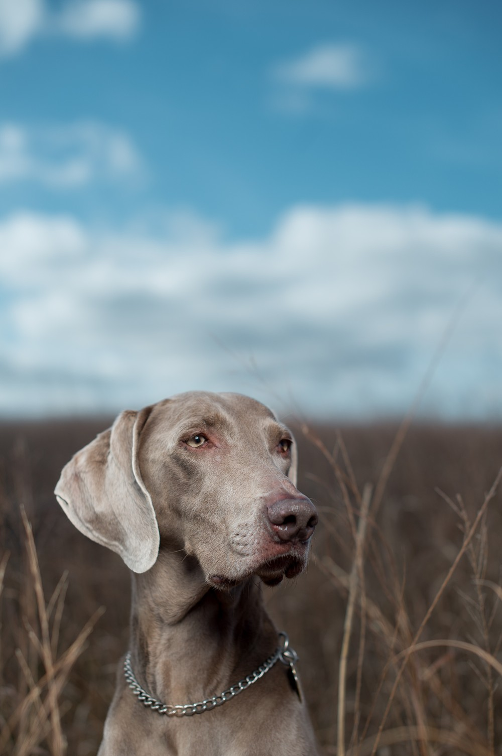 Ava Hunting by Christopher Flanegan Photography
