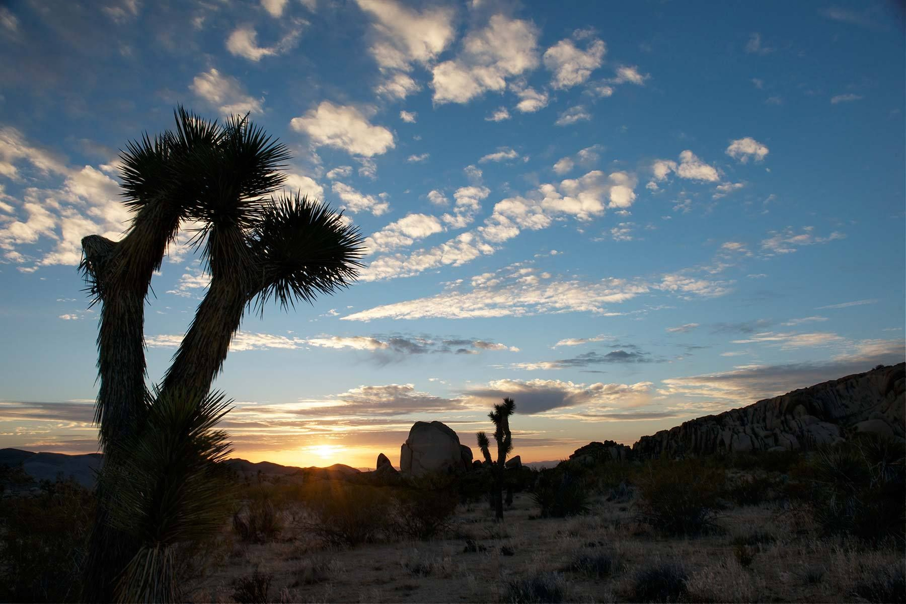 1joshua_tree_sunrise.jpg