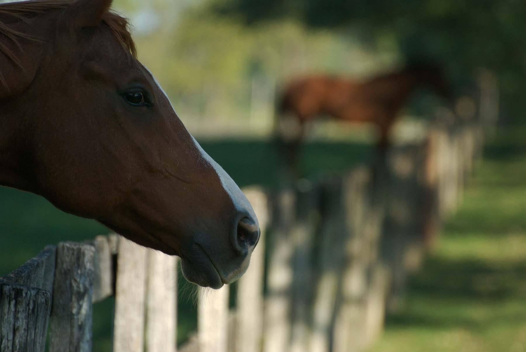 1tufton_horses_64.jpg