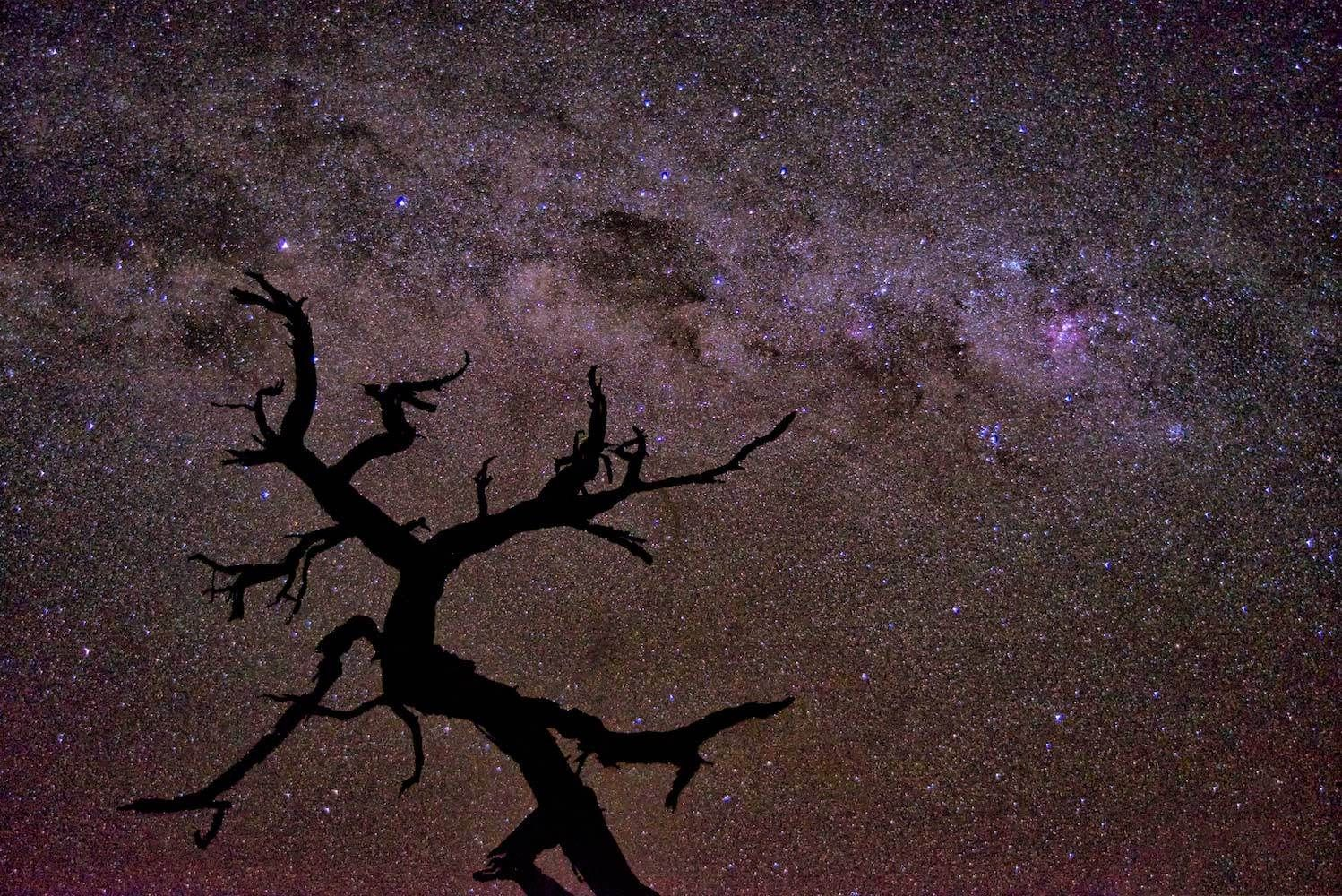 """Milky Way; Spooky Tree"""