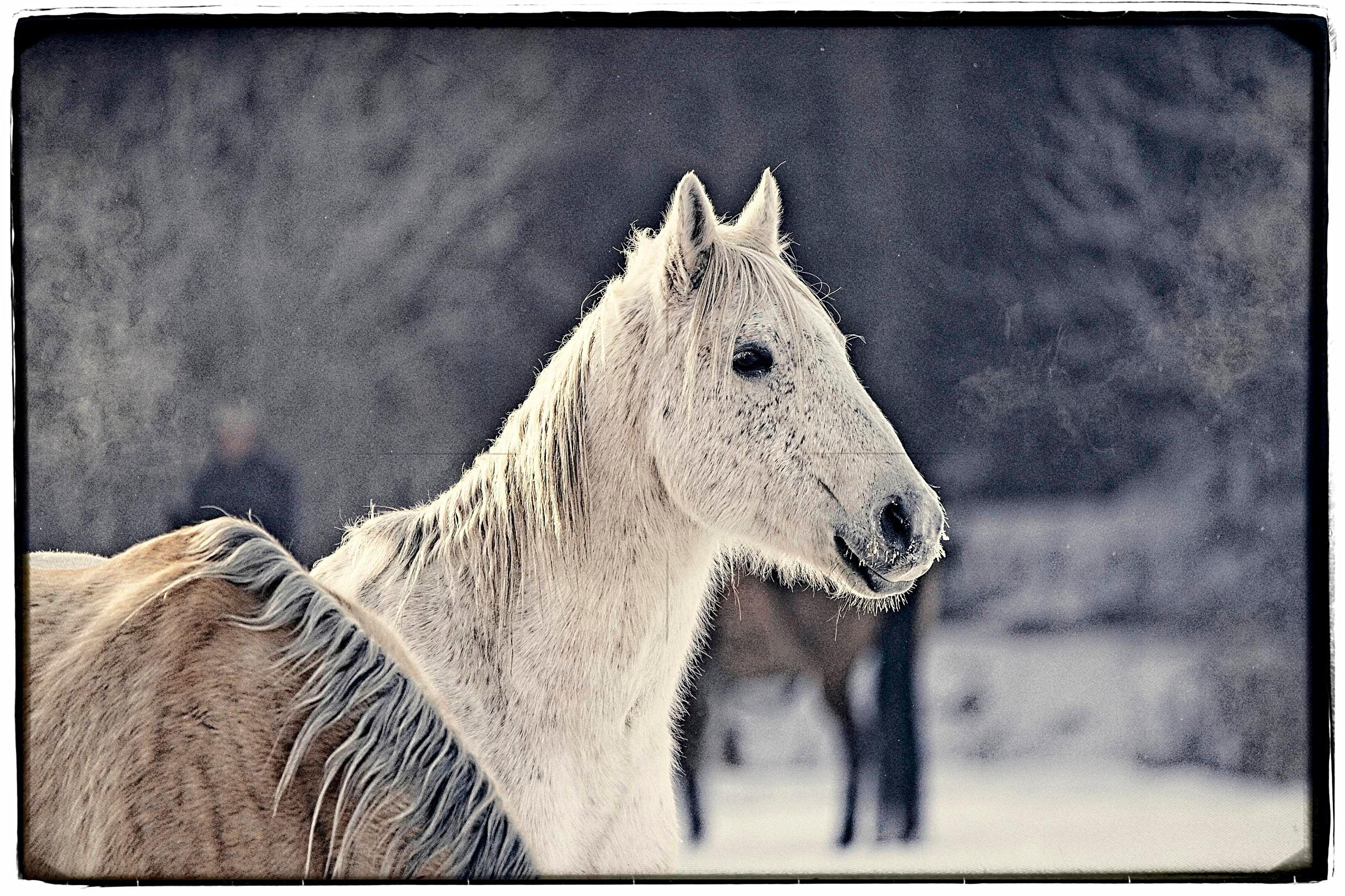 """Proud Horse"""