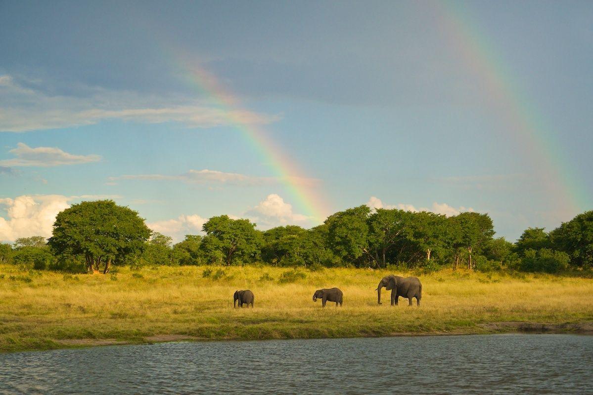 1rainbows_and_elephants.jpg