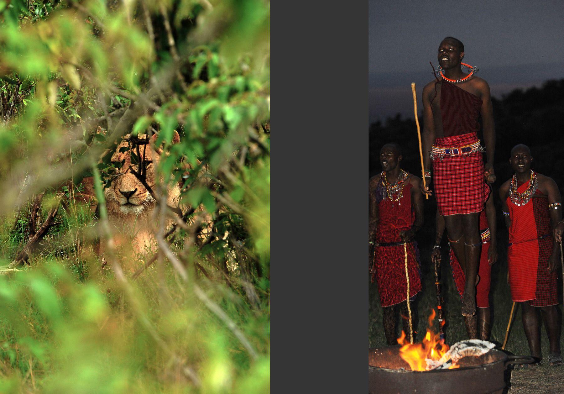 Lioness & Maasai ceremony