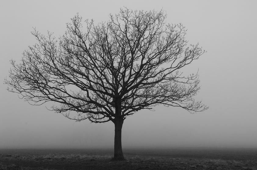 Tree in fog II
