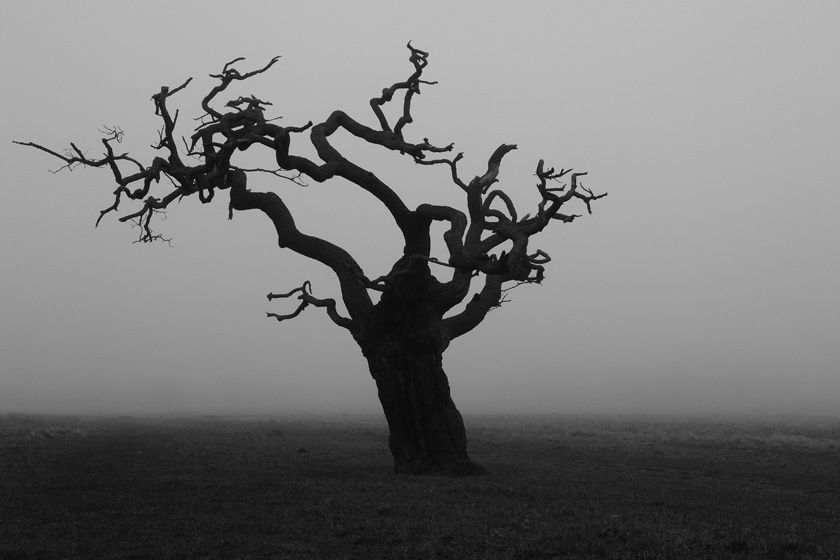 Tree in fog I