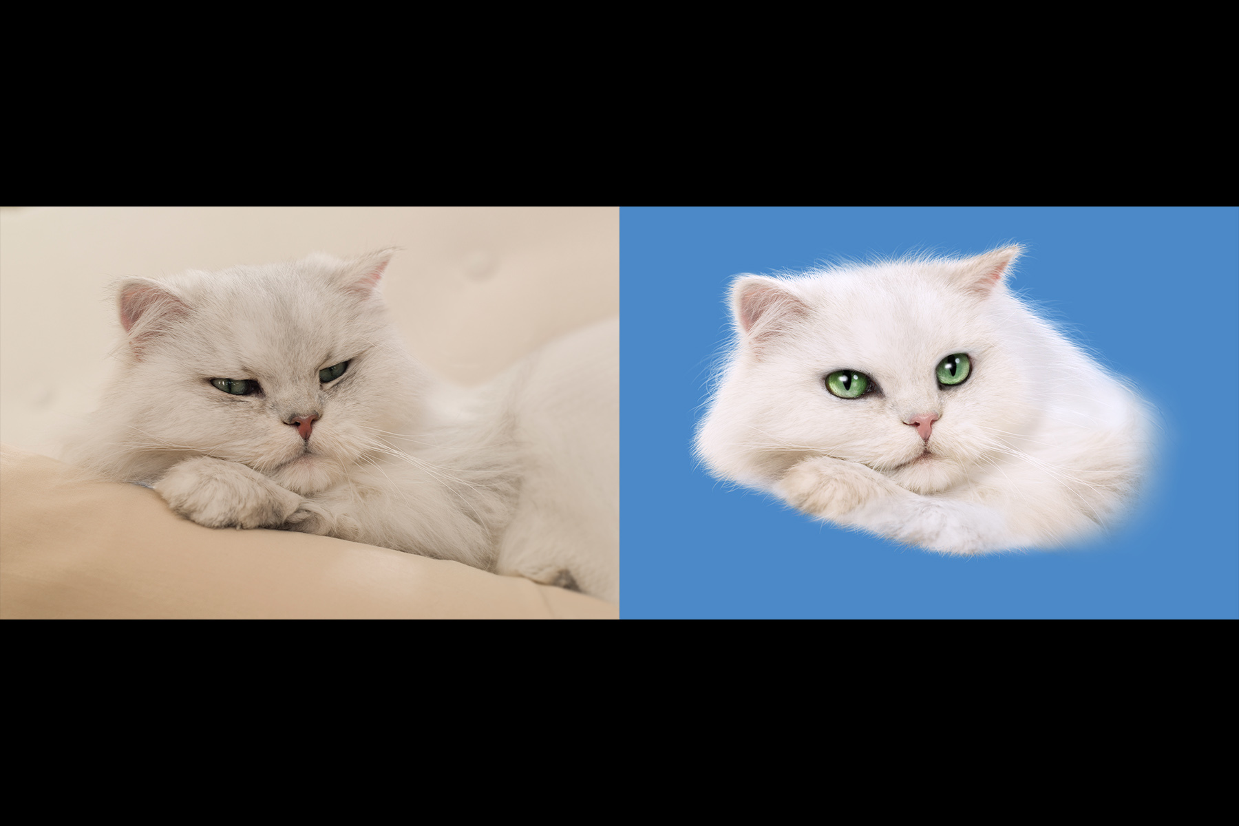 Fancy Feast Can Before/After