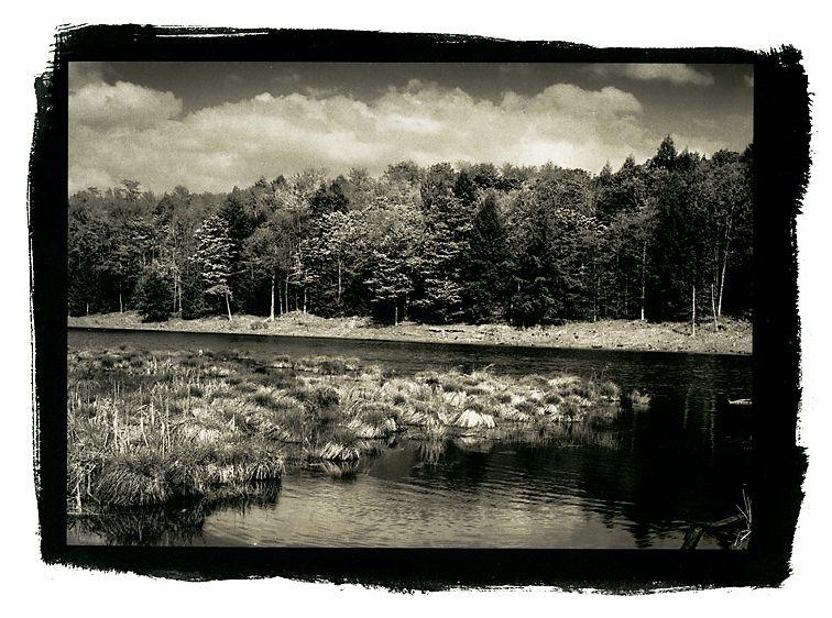 Westford Swamp, Westford, Vermont