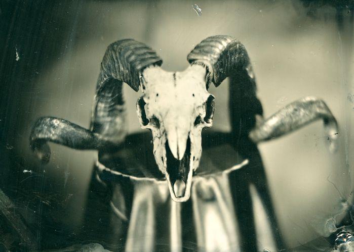 Rams Head SR.jpg