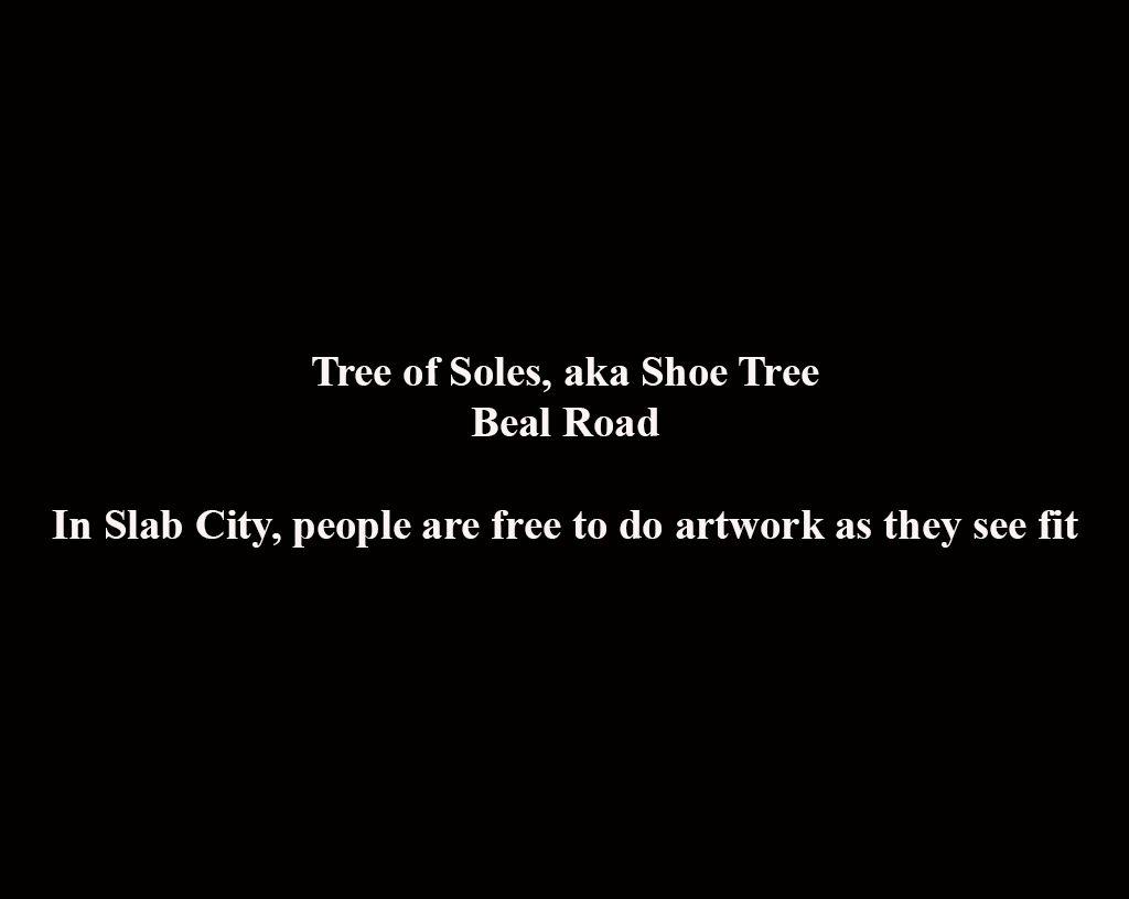 1tree_of_soles
