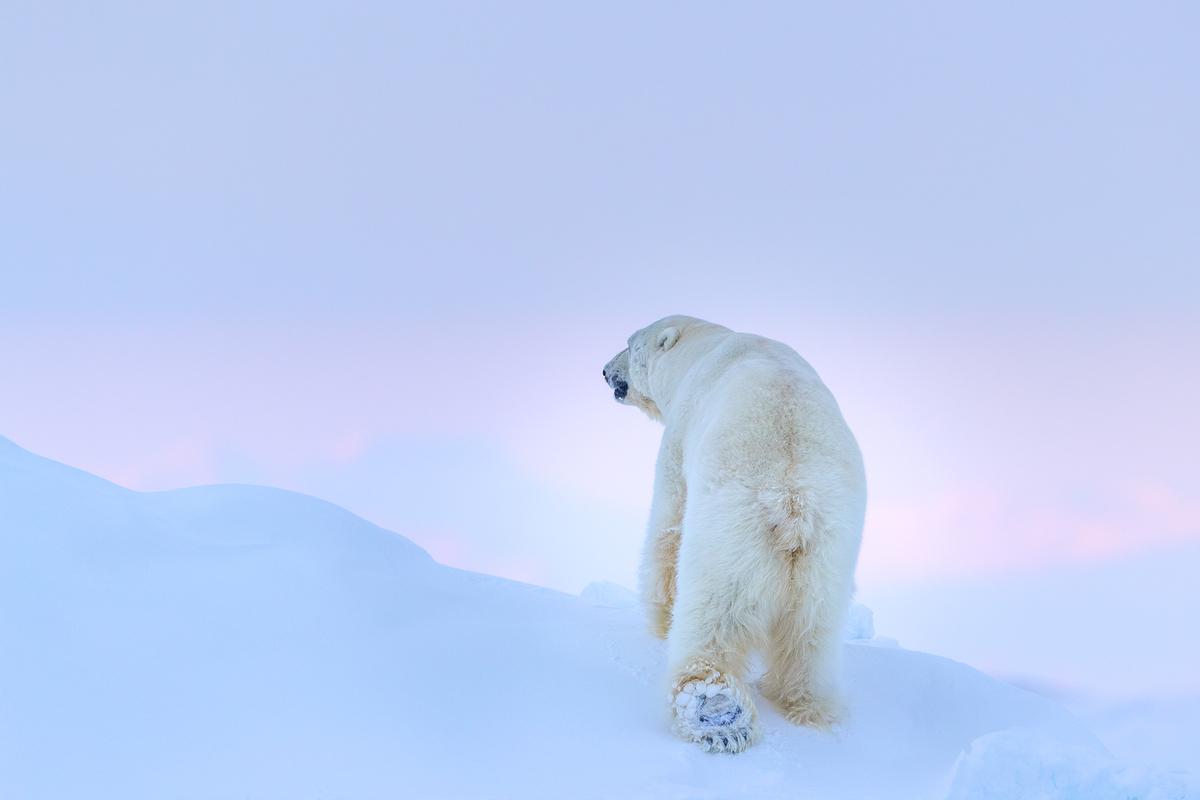 Svalbard-Winter-7.jpg