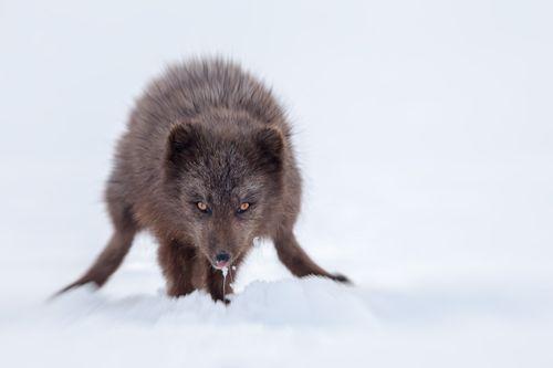 Arctic-10.jpg