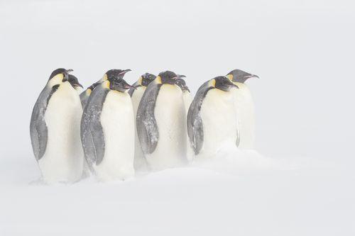 AntarcticaEmperor-11.jpg