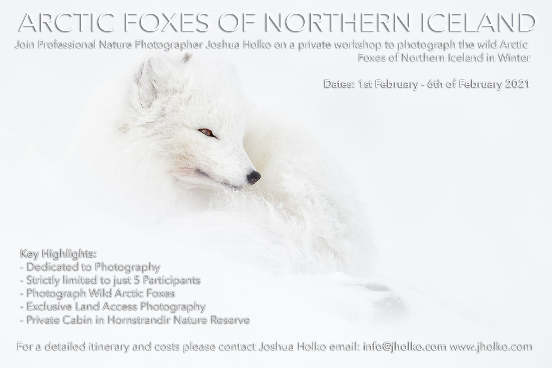 Arctic Fox Photography Expedition with Joshua Holko