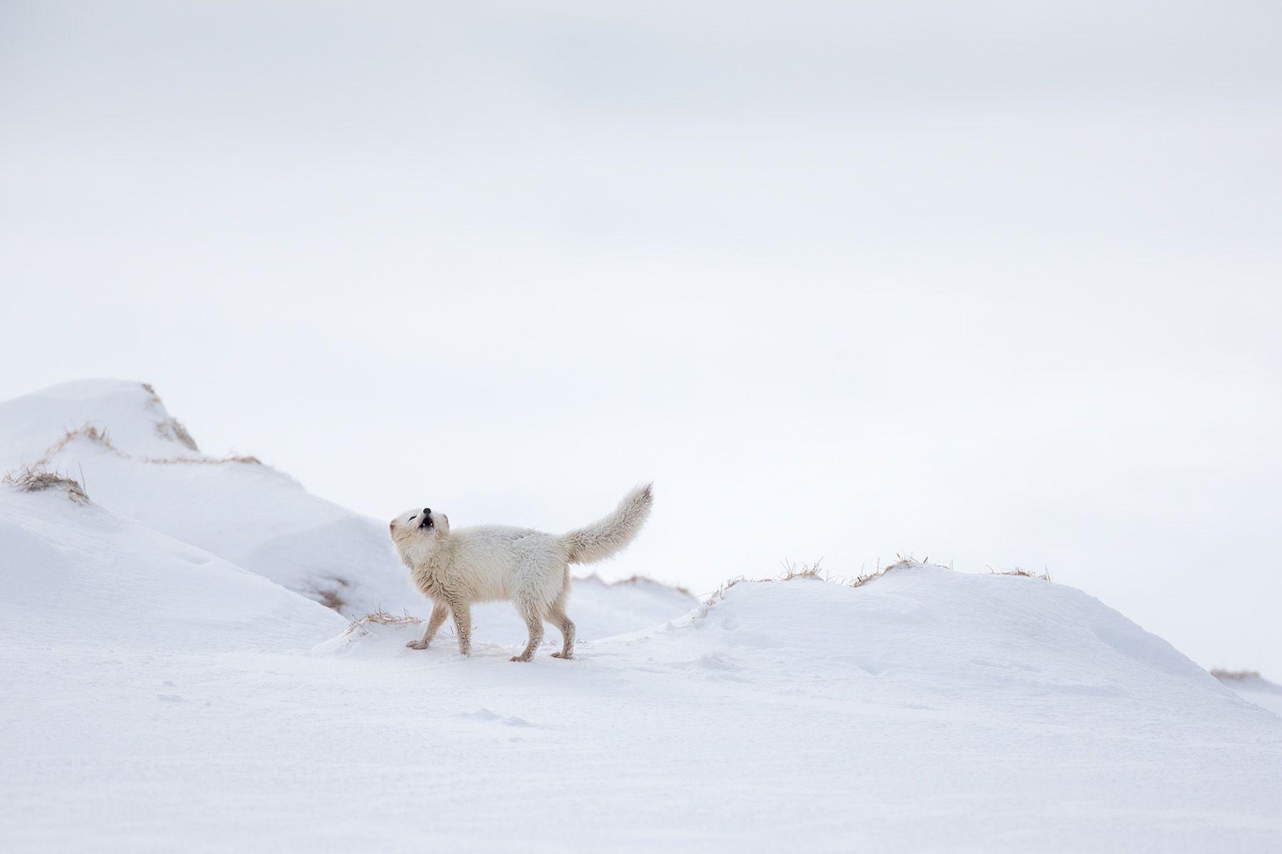 Arctic-4.jpg