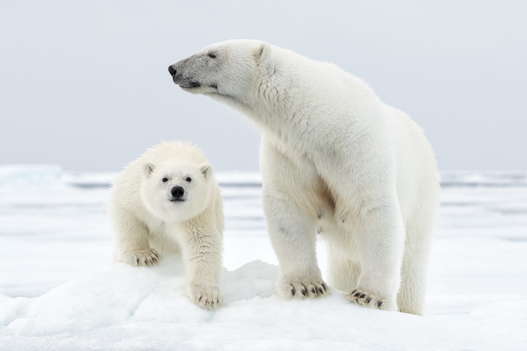 PolarBear-MotherandCub1.jpg