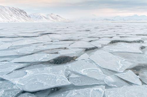 Svalbard-Winter-21.jpg