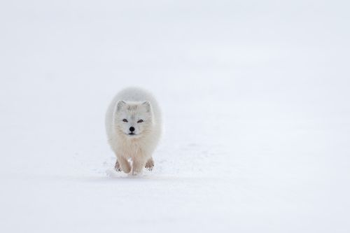 Arctic-2.jpg