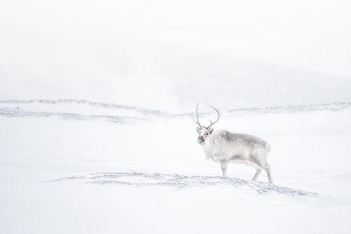 Svalbard-Winter-16.jpg