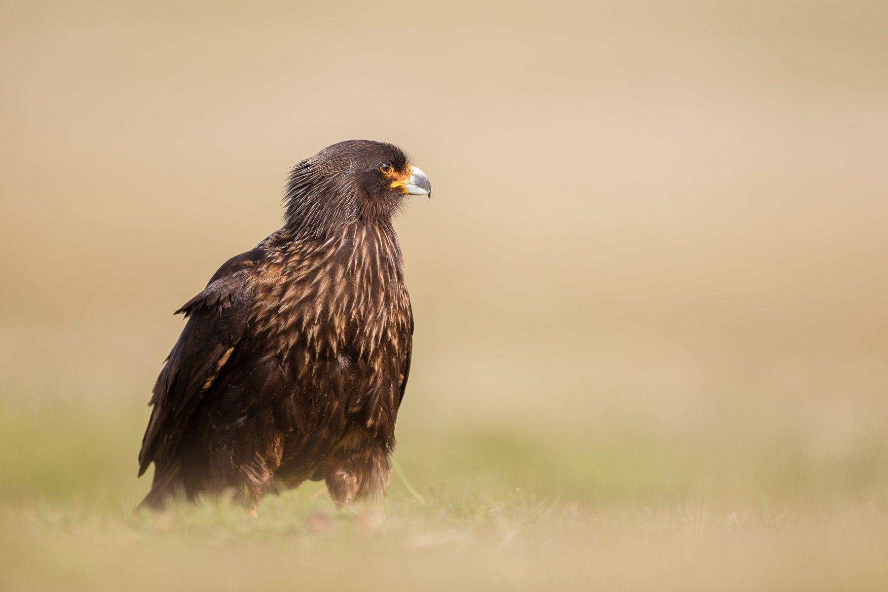 Falklands-6.jpg