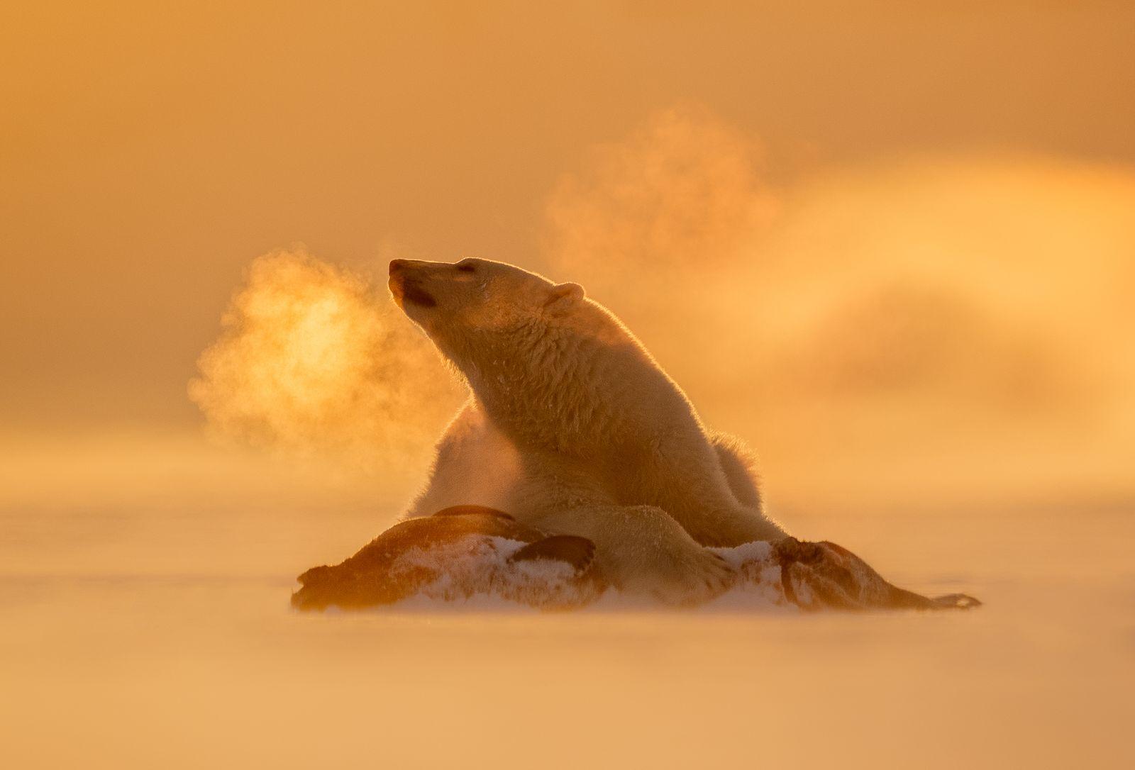 SvalbardWinter.jpg