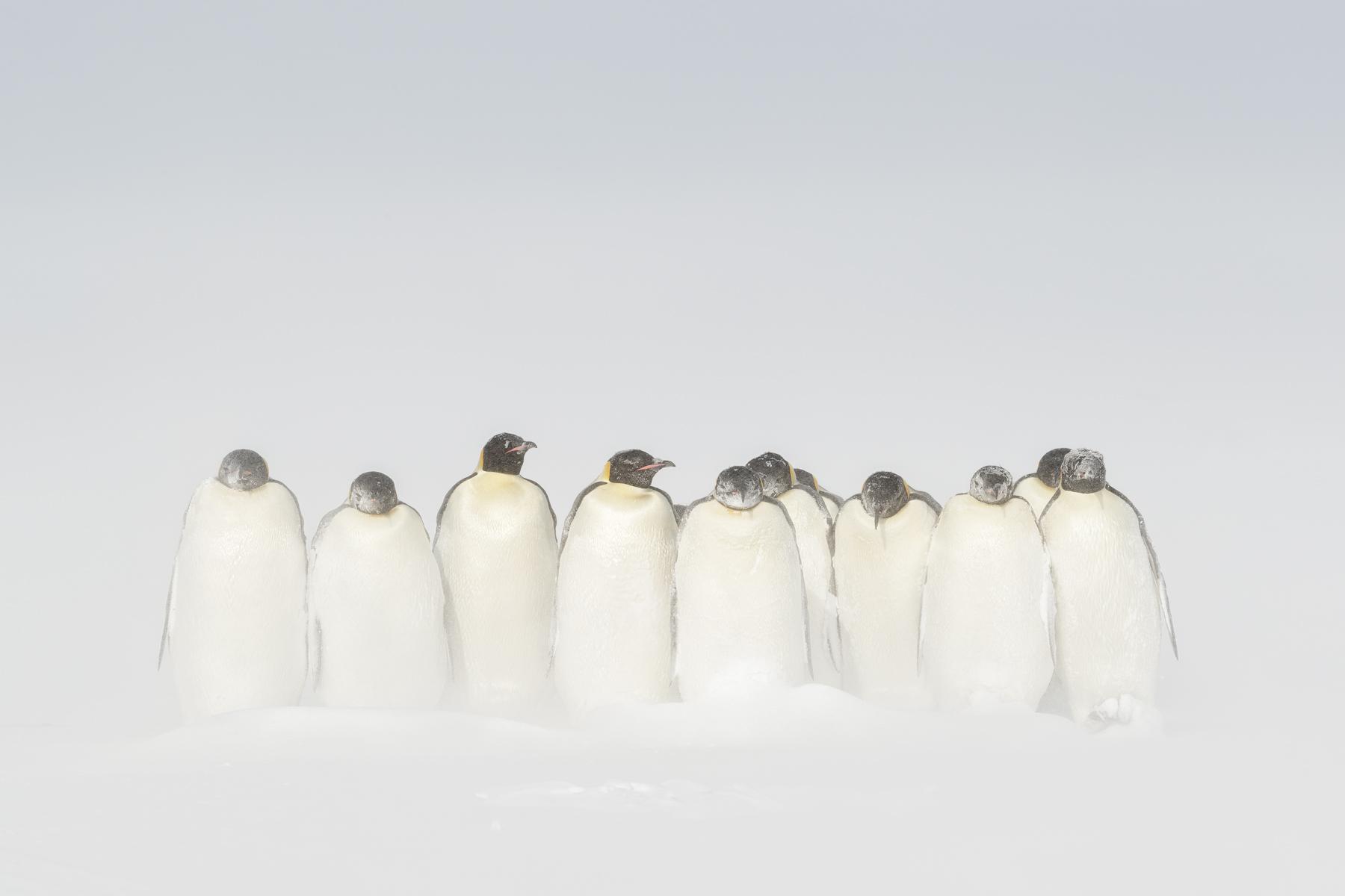 AntarcticaEmperor-1.jpg