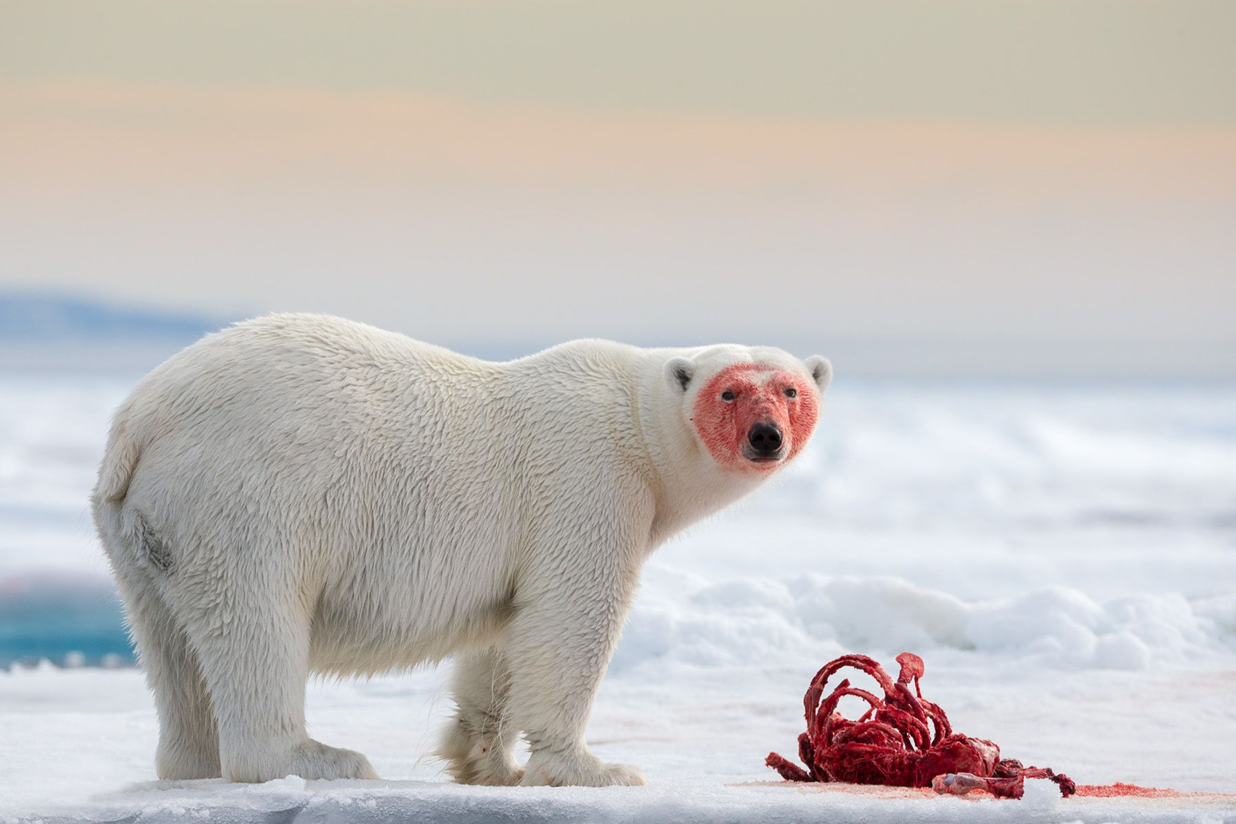 Svalbard-6.jpg