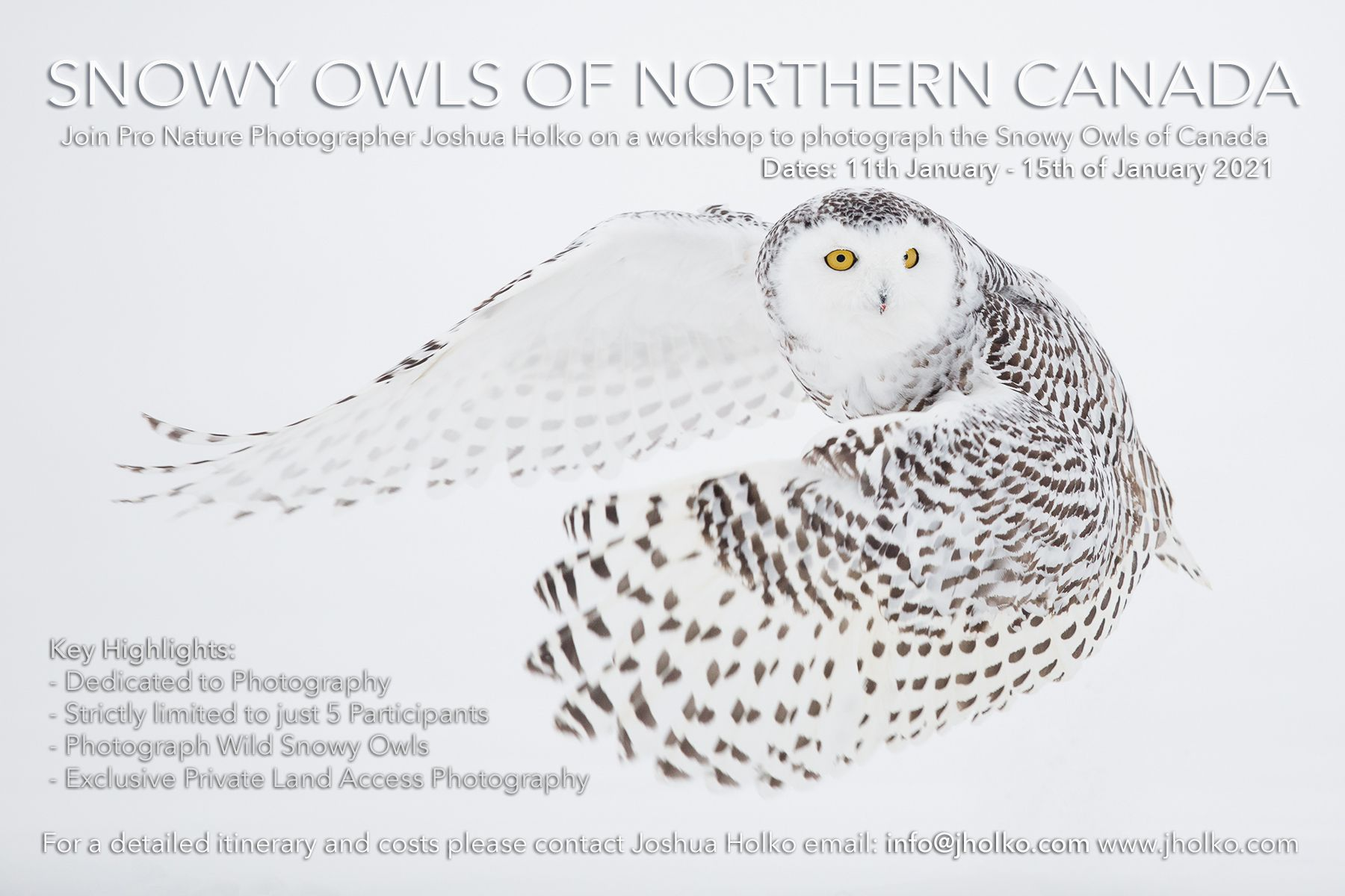 Snowy Owls of Northern Canada with Joshua Holko
