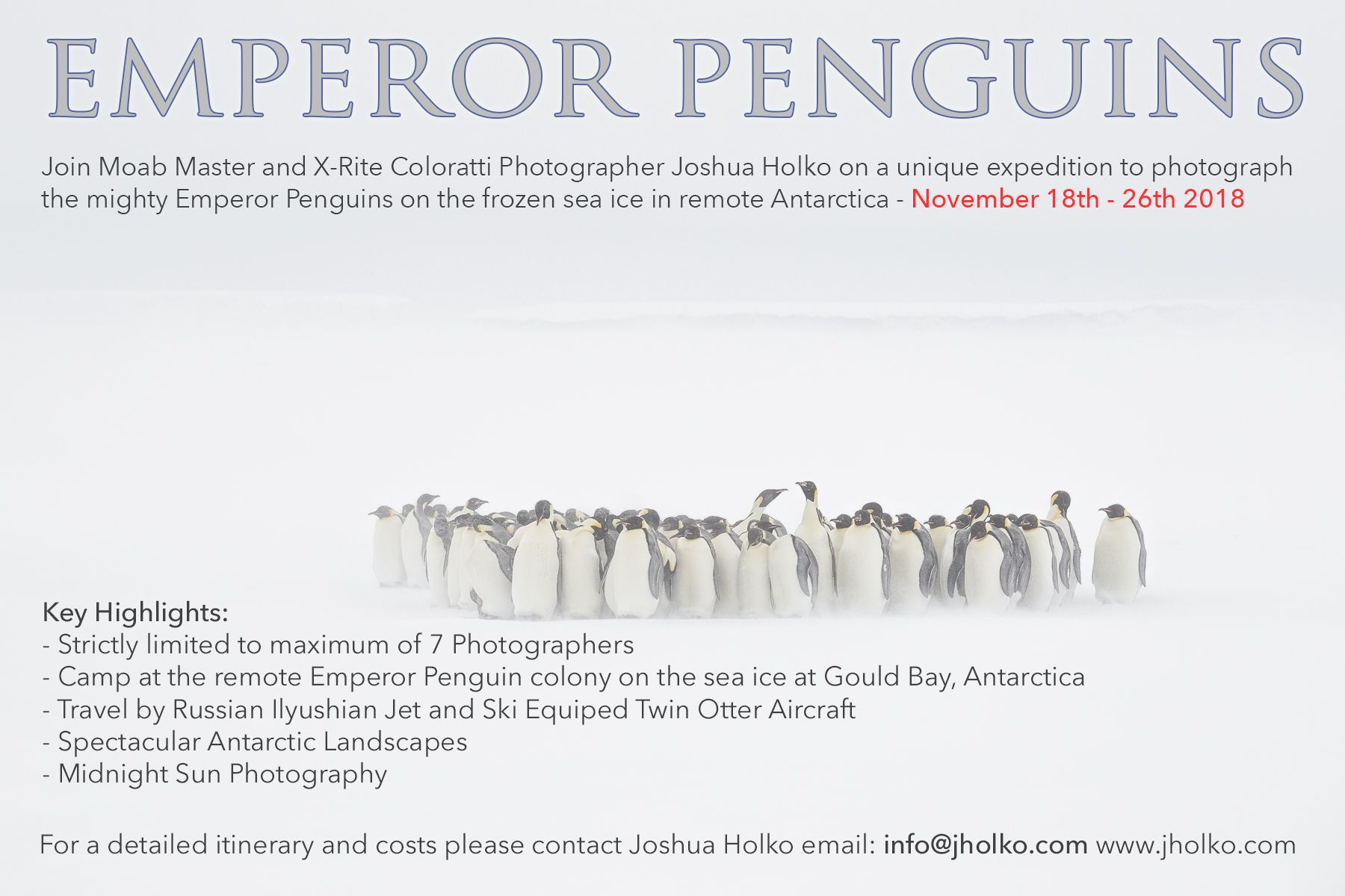 emperorpenguins-holko2018.jpg