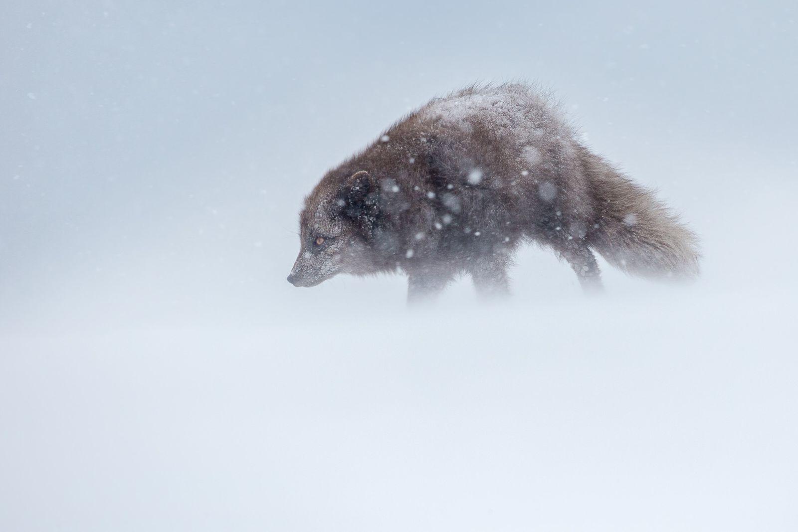 Arctic-21.jpg