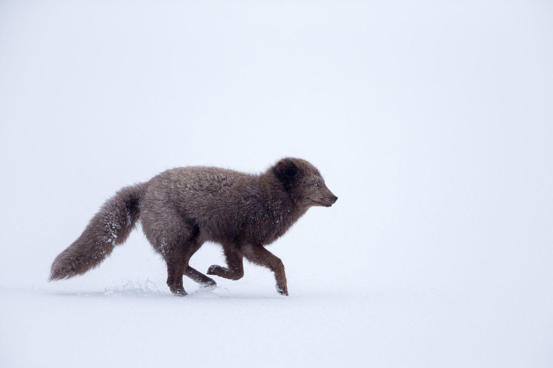 Arctic-6.jpg