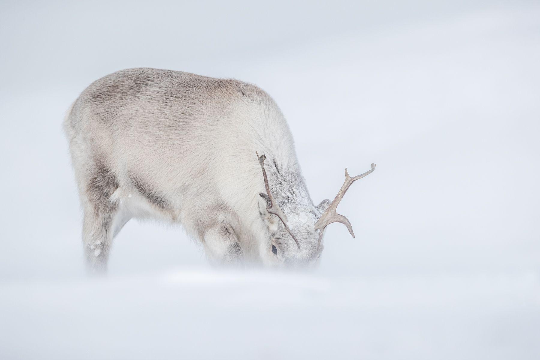 Svalbard-Winter-4.jpg
