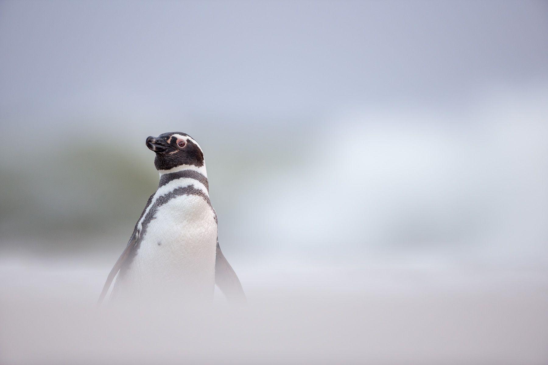 Falklands-5.jpg
