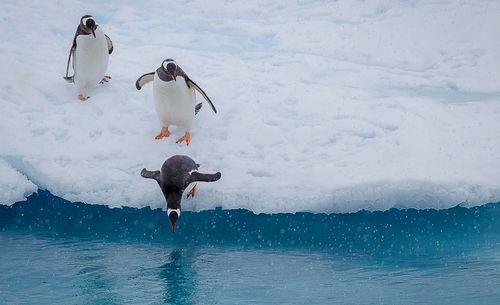 16_1penguin_jump_antarctica.jpg
